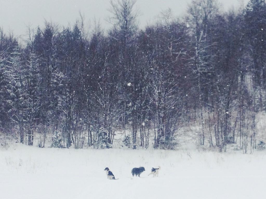 la foto 1 1024x768 Winter trip